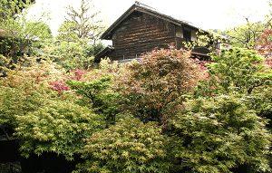 玩槭庭(がんしゅくてい)