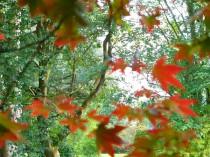 太陽の光を浴びているメープルの森