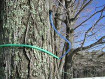 木に取り付けられたチューブ
