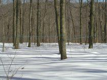 チューブが張り巡らされた森