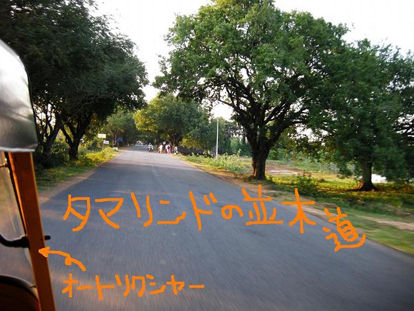 タマリンドの並木道
